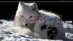 Arctic Fox - 550 - 3