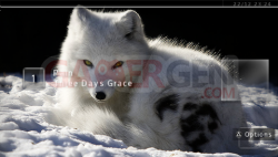 Arctic Fox - 550 - 4