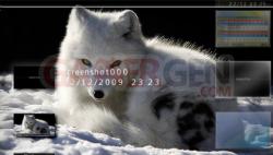 Arctic Fox - 550 - 5